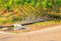 Niegrzeczny biały kota kucnięcie na ziemi fotografia royalty free
