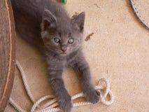 niegrzeczny kotek Zdjęcia Stock