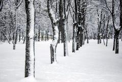 Śniegu krajobraz w zimie Obraz Royalty Free