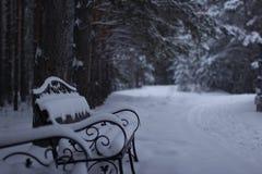 Śniegu ogród zdjęcie royalty free