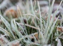 śniegurek trawy Obrazy Royalty Free