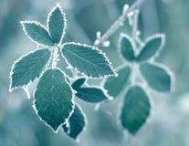 śniegurka liście Fotografia Stock