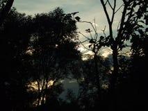 Niejasny zmierzch w lesie Fotografia Royalty Free