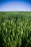 niekończące się trawy. obraz stock