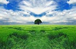 niekończący się śródpolny drzewo Zdjęcie Royalty Free