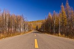 Niekończący się droga w leśnictwie Obrazy Stock