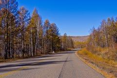Niekończący się droga w leśnictwie Obraz Royalty Free