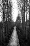 Niekończący się drzewa Fotografia Stock