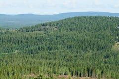 Niekończący się las Obrazy Royalty Free