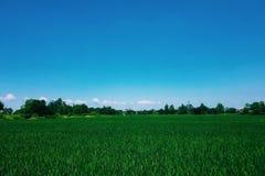 Niekończący się pole, niebieskie niebo, wiosna dzień obrazy stock