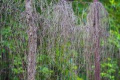 Niektóre suche przerażające rośliny na drutu kolczastego ogrodzeniu tworzyli pięknego tło zdjęcie royalty free