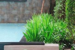 Niektóre ładny luksusowy roślinności dobro along popiera kogoś pływackiego basenu robi dla ładnej równowagi, pokojowego miejsca i Zdjęcia Royalty Free