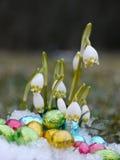 Niektóre śnieżyczek czekoladowi jajka śnieżni Zdjęcie Stock