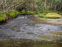 Niektóre część siklawa phu kradueng park narodowy Zdjęcie Stock