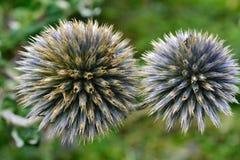 Niektóre dziwny kwiat Zdjęcia Stock