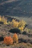 Niektóre jesienni drzewa w spódnicie wzgórze Zdjęcia Stock