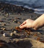 Niektóre kawałki bursztyn zakładają na Bałtyckim seashore Obraz Royalty Free