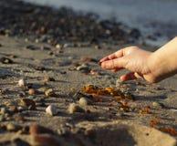 Niektóre kawałki bursztyn zakładają na Bałtyckim seashore Obraz Stock
