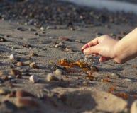 Niektóre kawałki bursztyn zakładają na Bałtyckim seashore Zdjęcie Royalty Free