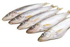 Niektóre kawałki odosobniony deliciouse wytapiają ryby na białym tle zdjęcia stock