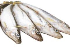 Niektóre kawałki odosobniony deliciouse wytapiają ryby na białym tle obraz stock