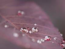 Niektóre kryształy na liściu Zdjęcie Stock