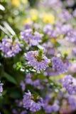 Niektóre kwiaty przy słonecznym dniem jako krajobrazowi projektów elementy Zdjęcie Stock
