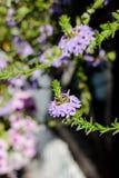 Niektóre kwiaty przy słonecznym dniem jako krajobrazowi projektów elementy Fotografia Stock