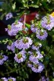 Niektóre kwiaty przy słonecznym dniem jako krajobrazowi projektów elementy Obraz Royalty Free