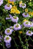 Niektóre kwiaty przy słonecznym dniem jako krajobrazowi projektów elementy Obrazy Royalty Free