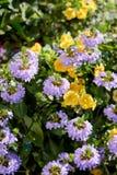 Niektóre kwiaty przy słonecznym dniem jako krajobrazowi projektów elementy Zdjęcia Royalty Free
