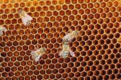 Niektóre miodowe pszczoły zdjęcia stock