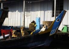Niektóre psy Obrazy Royalty Free