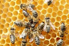 Niektóre pszczoły tanczą fotografia stock