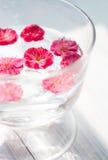 Niektóre różowa śliwka kwitnie unosić się w wodzie Fotografia Royalty Free