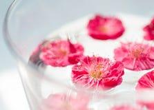 Niektóre różowa śliwka kwitnie unosić się w wodzie Fotografia Stock