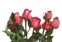 Niektóre różowią róże Zdjęcie Royalty Free