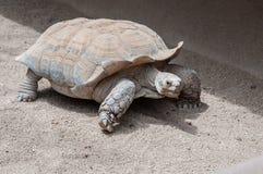 Niektóre zoo oldestand slowestresidents są Galpagos tortoises zdjęcie royalty free