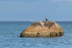 Nieletni czubaty kormoranu tyczenie na wielkiej skale blok, podczas gdy mała biała łódź przechodzi wzdłuż horyzontu fotografia royalty free