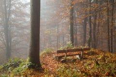 Niemcy, Berchtesgadener ziemia, ławka w jesień lesie, mgłowym Zdjęcia Stock