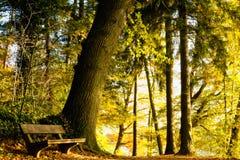 Niemcy, Hamburg, jesień las, ławka Fotografia Royalty Free
