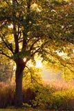 Niemcy, Hamburg, jesień las, światło słoneczne Zdjęcia Stock