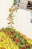 Niemcy jabłka spada od konwejeru paska na jabłczanej górze w cydr wytwórnii win fotografia stock
