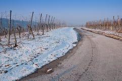 niemiec śnieżna winnicy zima Zdjęcia Royalty Free