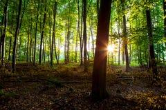 Niemieccy drewna Fotografia Stock
