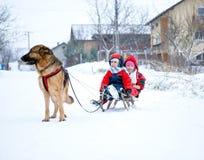 Niemieccy Pasterskiego psa ciągnięcia dzieci na saniach podczas śnieżnego czasu Obraz Stock