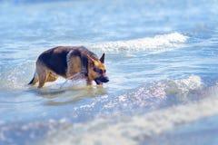 Niemiecka baca na plaży w błękitnym oceanu morzu Zdjęcia Stock