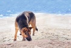 Niemiecka baca na plaży w błękitnym oceanu morzu Obrazy Royalty Free