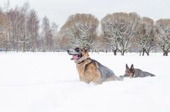 Niemiecka baca Pies sztuka z each inny fotografia royalty free