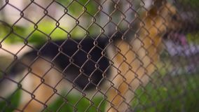 Niemiecka baca za siecią, dzień zdjęcie wideo